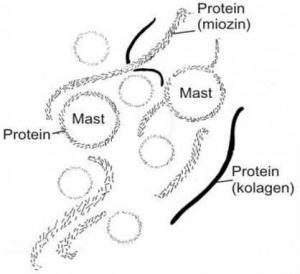 Šematski prikaz formiranja emulzije