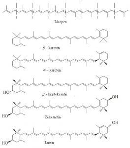 Faze degradacije hlorofila