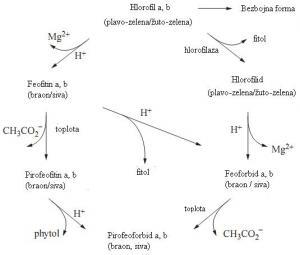 Struktura najprisutnijih karotenoida u voću