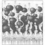 Kontrolisani protok vazduha u fluidizeru