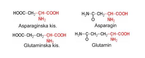 Aminokiseline i njihovi amidi