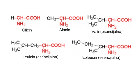 Aminokiseline sa alifatskom R-grupom