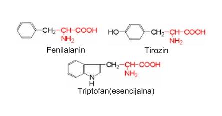 Aminokiseline sa aromatskim prstenom