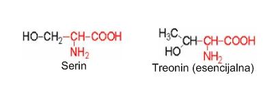 Aminokiseline sa hidroksil R-grupom