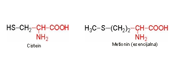 Aminokiseline sa sumporom u bočnom lancu