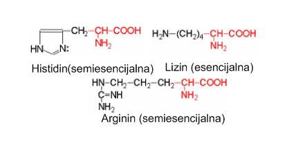 Bazne skupine amino kiselina