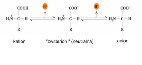Disocijacija aminokiselina