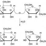 Hidroliza saharoze