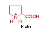 Imino kiselina