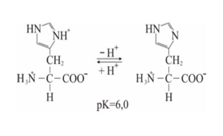 pK za imidazolski prsten histidina 6,0