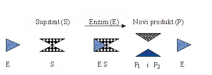 Principijelna aproksimativna shema djelovanja enzima na supstrat