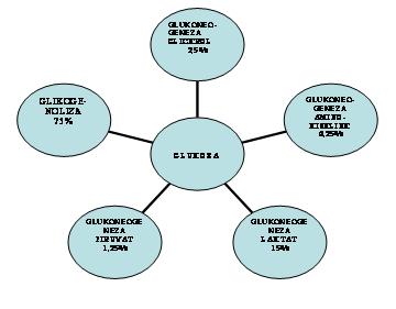 Procentni odnos učešća određenih procesa pri stvaranju glukoze