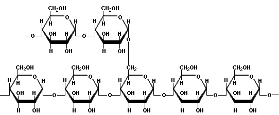 Struktura amilopektina