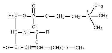Struktura sfingomijelina