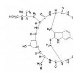 Amanita phalloides i amatoksin (amanitin) toksin zelene pupavke
