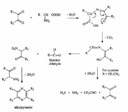 Strekerova degradacija aminokiselina