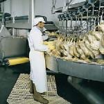 Kačenje živine iz prihvatne posude